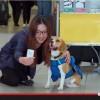 Pies KLM do zadań specjalnych