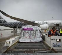 Airbus wraz z Czerwonym Krzyżem z pomocą ofiarom huraganu Irma!
